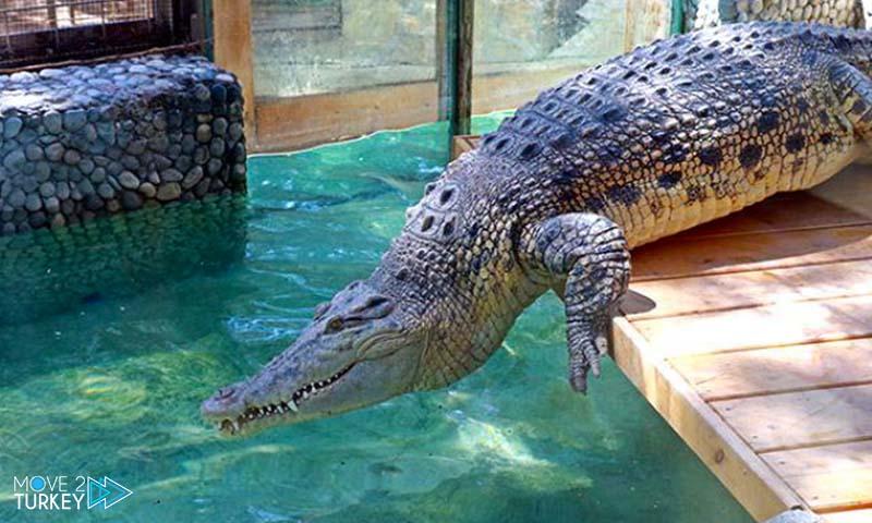largest crocodile in turkey