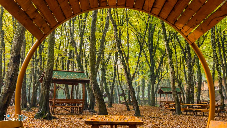 Belgrade forest in Istanbul